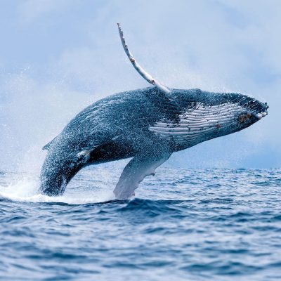 whale-watching1